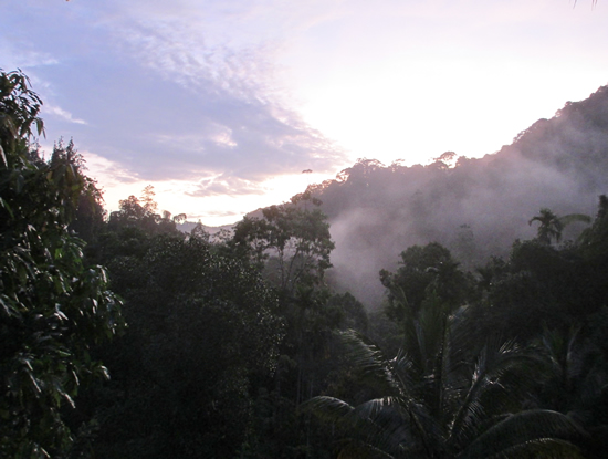 Sinharaja at dawn