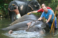Colin Scott scrubbing and elephant