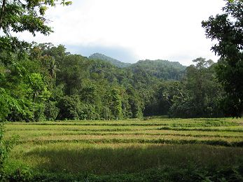 Kitungala Forest from village area